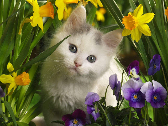Cute Little Kitty And Flowers Wallpaper