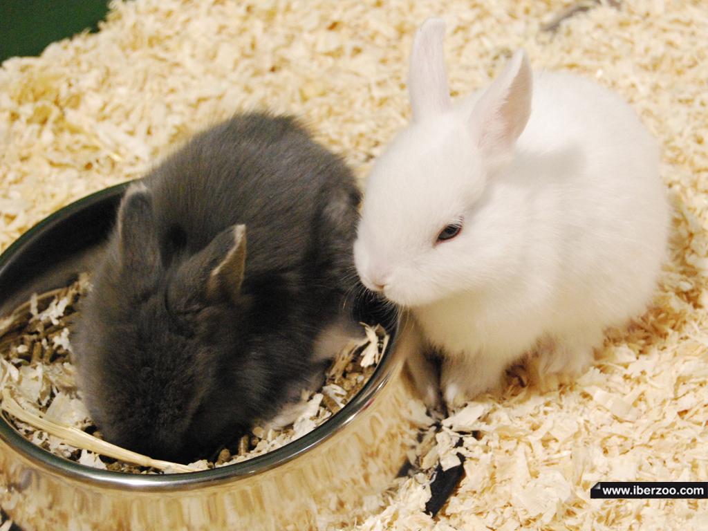 Conejitos Mas Y Mas Conejos
