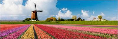 Holanda y sus amapolas