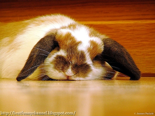 Sleeping bunny.