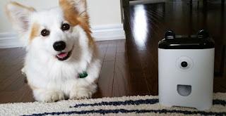 Primer Smartphone para perros