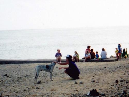 夕方になるとローカルの人もフィジー犬も集まってくるホテル前のビーチ
