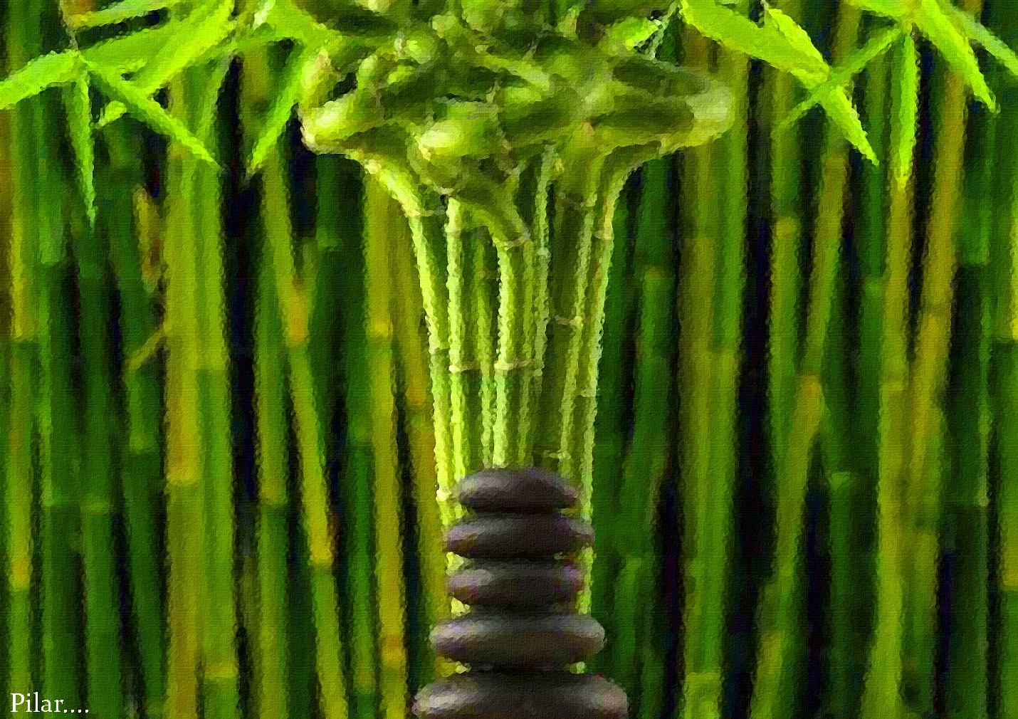 Bambu Baño Feng Shui:PILAR Y SUS COMPLICES: BAMBU