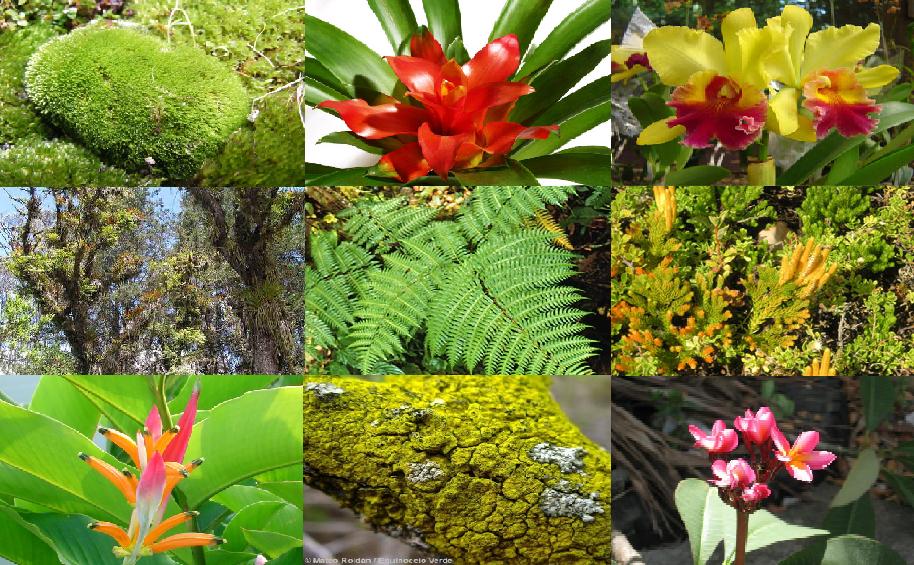 Biodiversidad del ecuador flora de la regi n natural for Plantas ornamentales del ecuador