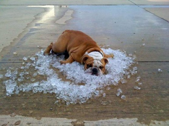 Stay Cool Out There Dog and Ice