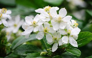 Luarca, Jardines de la Fonte Baixa, flor