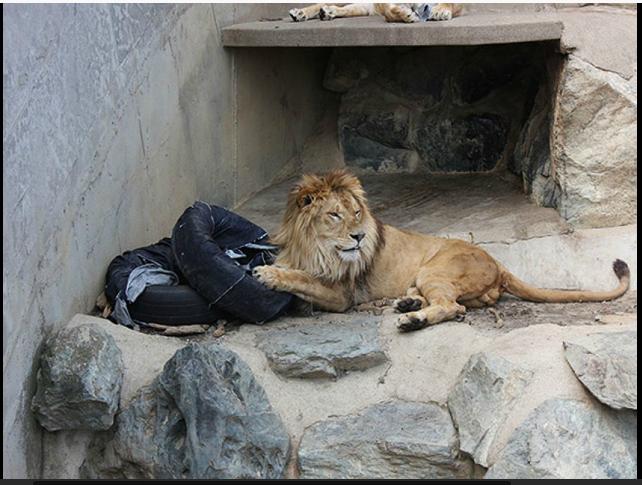 http://www.liataja.com/2014/10/desain-jeans-karya-harimau-dan-singa-dan-harimau-jepang.html