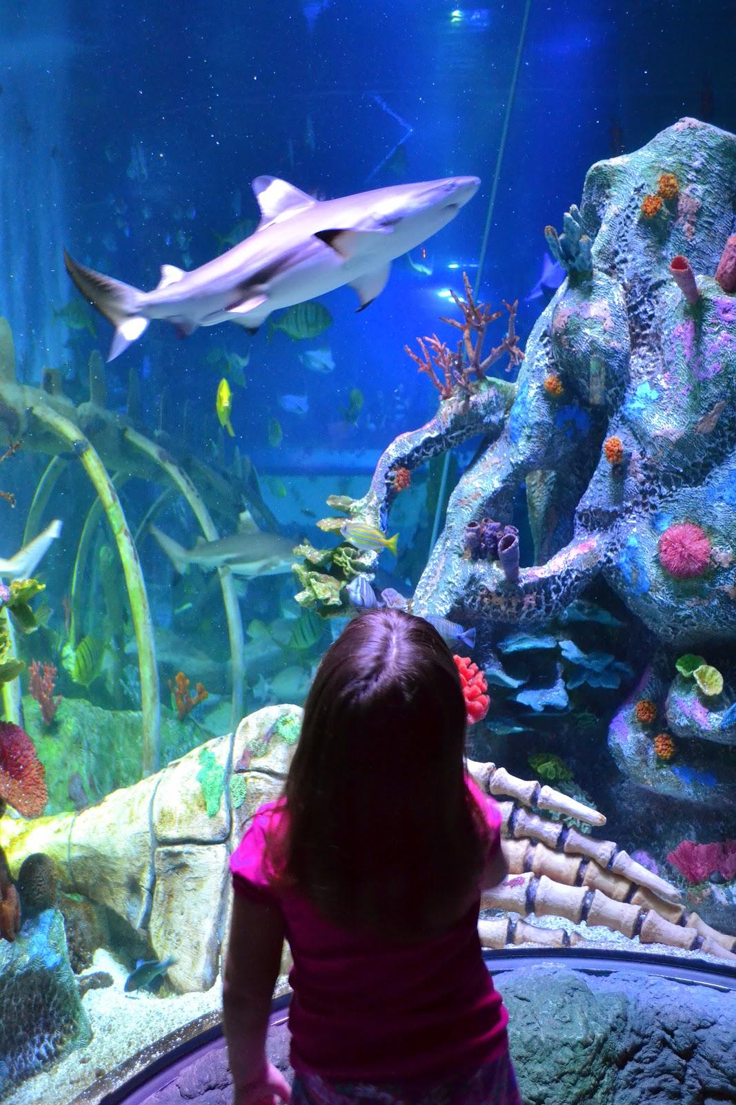 sex aquarium