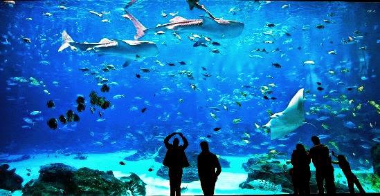 El acuario más grande del mundo (Acuario de Georgia).