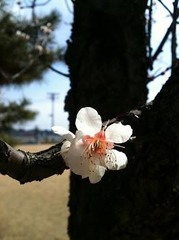Jorge anjo do ocidente uma flor linda para um anjo amigo!