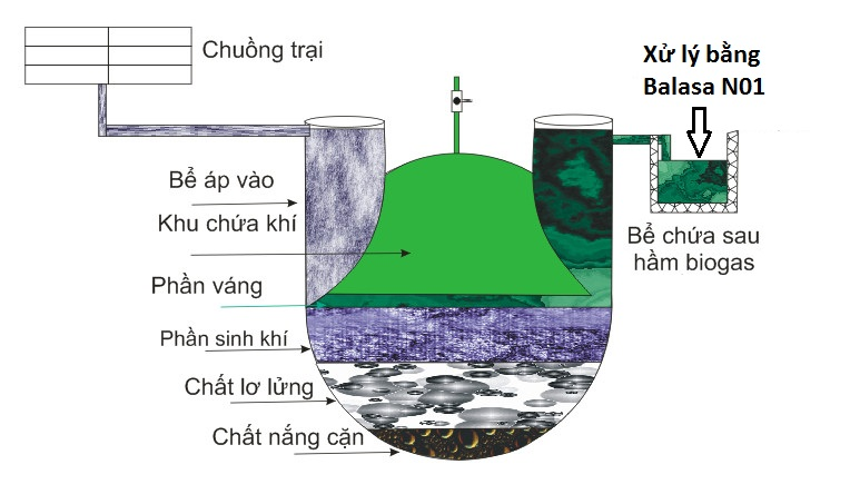 xử lý chất thải biogas bằng balasa n01