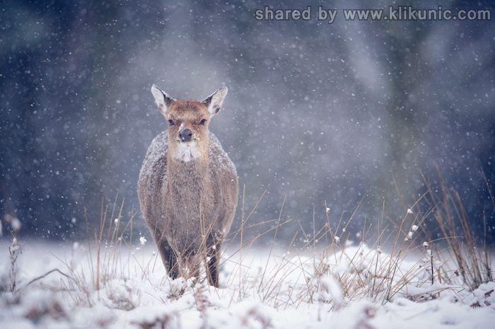 http://4.bp.blogspot.com/-b6w3siWl9Fw/TX1k-cy_HnI/AAAAAAAARIg/UKYU6AgxvT8/s1600/winter_64.jpg