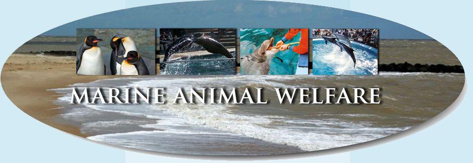 Marine Animal Welfare