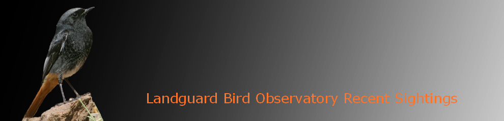 Landguard Bird Observatory Recent Sightings