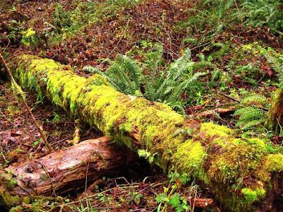 Oregon, Lane County, Rain Forest, Coast Range, Trees, Forest