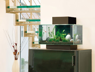 Fluval Edge Aquariums