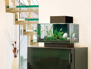 Fluval Edge Aquariums