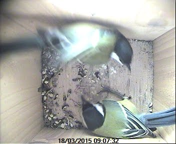 Nest box action Updated 15 April 2015