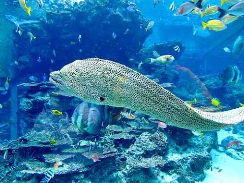 Churaumi Aquarium Jepang