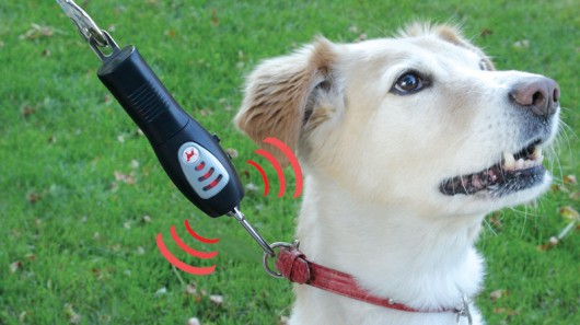 Best Flexi Leads For Dogs