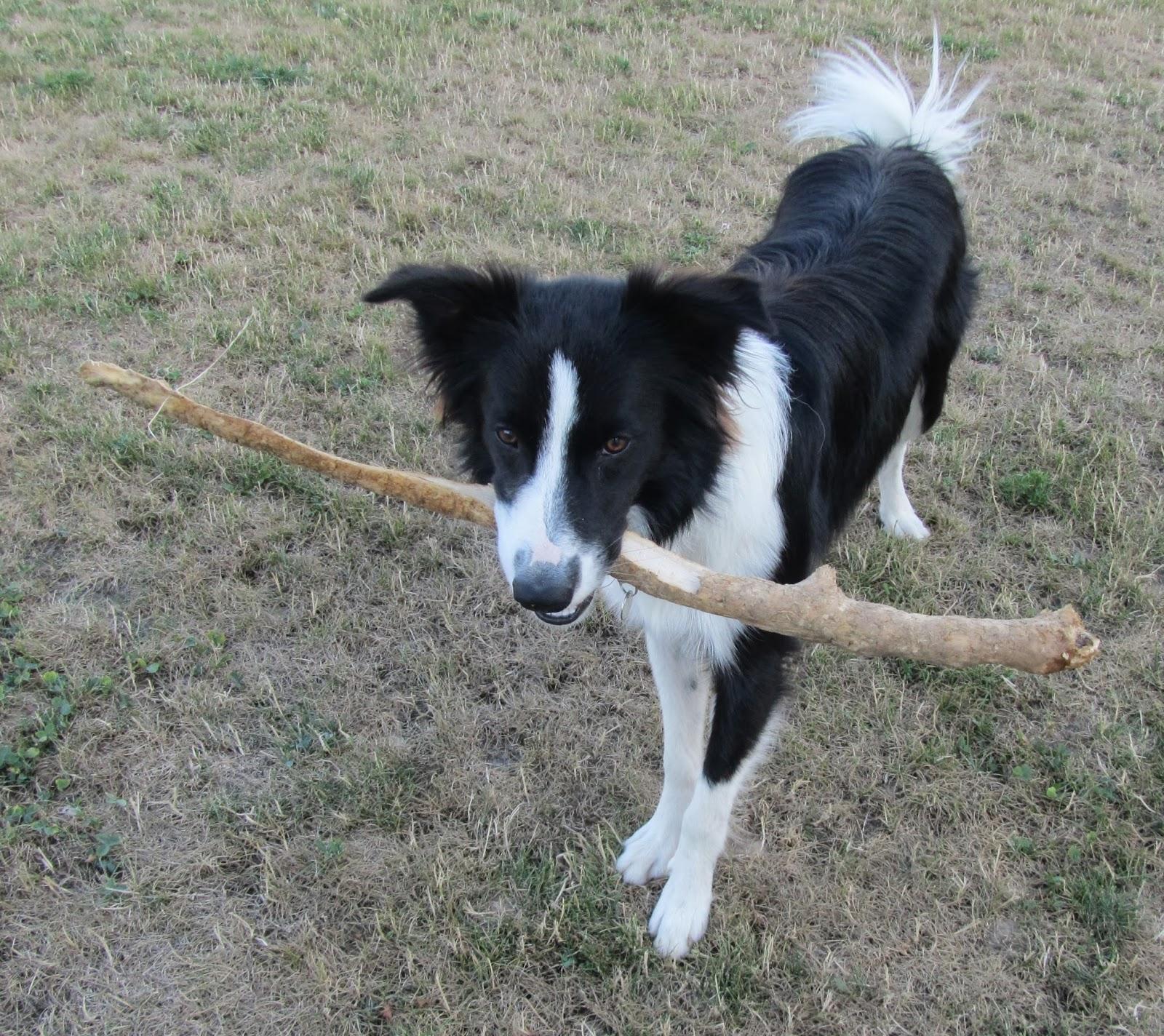 Haribo et Louna : Astuces essentiels pour dresser un chien
