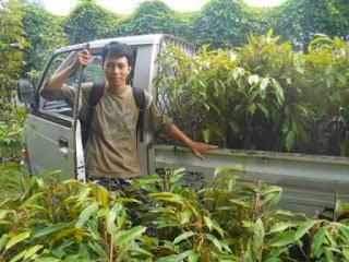 distributor bibit durian nasa