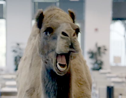 Geico+Hump+Day.png