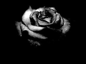 Black Rose Flower Wallpaper