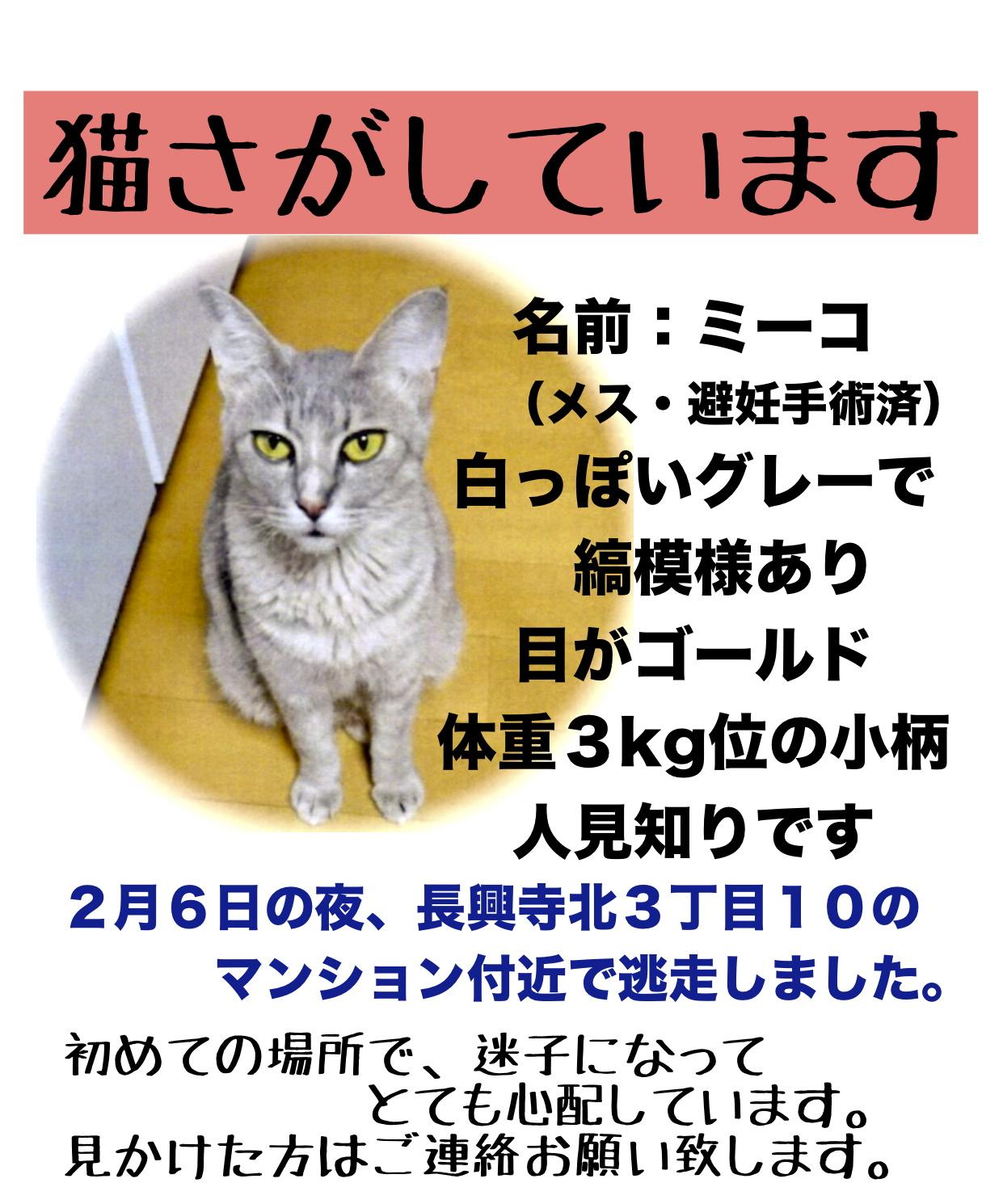 【迷子猫ミーコ*豊中市】