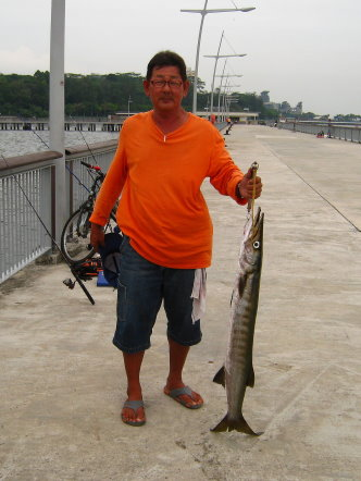 Yellowtail Barracuda [Sphyraena Flavicauda] also know as Saw Kun 沙君 [Hokkien] or Ikan Kacang [malay] weighing 5kg plus caught by Ah Tan at Woodland Jetty on 13th July 2013 using live Five-spot Herring or Assam fish (local), Selangat (malay) on float.