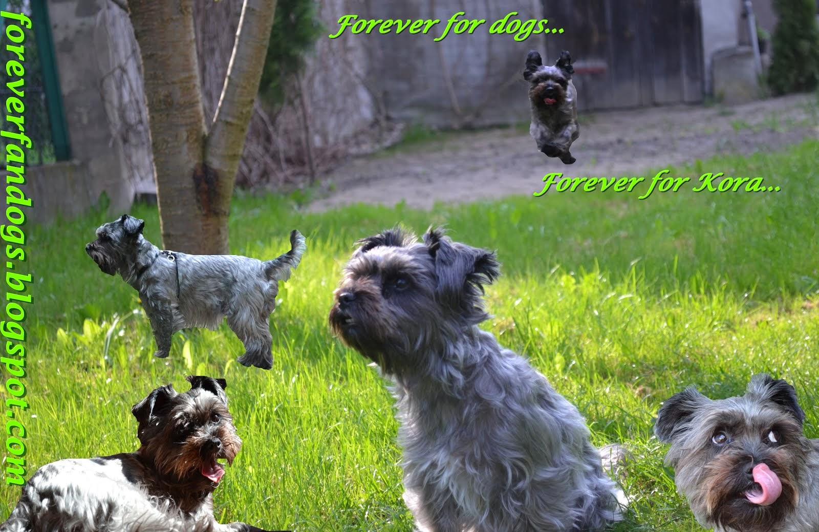 Forever for dogs... Forever for Kora....