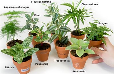 Le cerveau de l 39 enfant et de l 39 adolescent la pollution for Petite plante exterieur