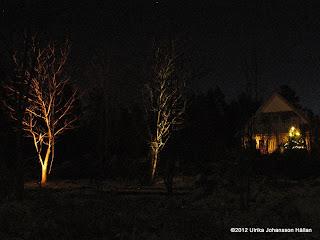 Trädgårds belysning
