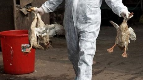 2.5m Chickens Now Affected By Bird Flu In Nigeria, As Disease Spreads To 18 States