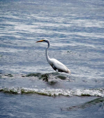 Lake Erie Bird Photograph