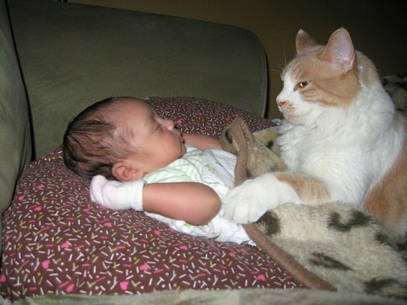 http://www.funmag.org/pictures-mag/cute-babies/cute-babies-and-cats/
