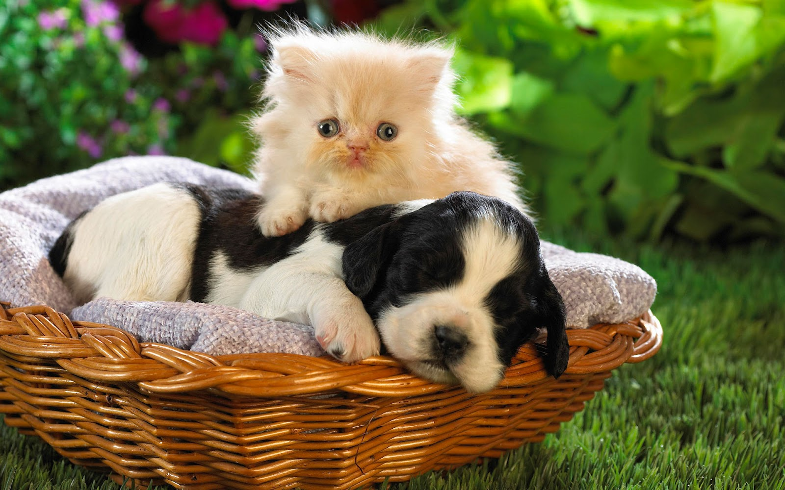 http://4.bp.blogspot.com/-bAyBZF2B-4U/T-f_Geii4CI/AAAAAAAACdM/aY-yrMFQAzA/s1600/Free+Animal+Wallpapers+%252817%2529.jpg
