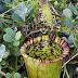 Worlds Most Dangerous Plants & Deadliest Plants on the Earth