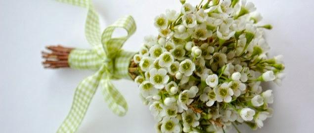 Waxflower Bouquet Fresh Flowers