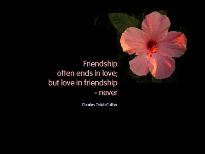 Quotes About Love And Friendship In Hindi : Friendship is Like SMS Romantic Hindi SMS