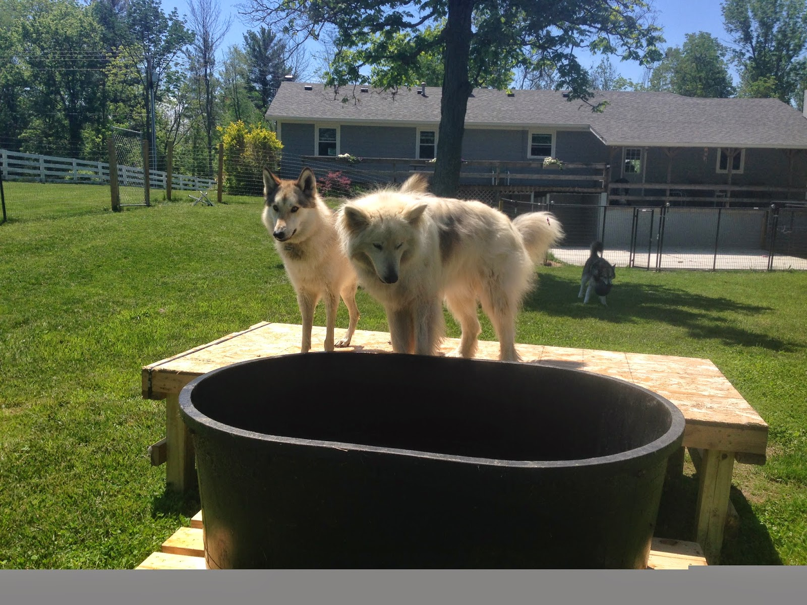 make a dog swimming pool