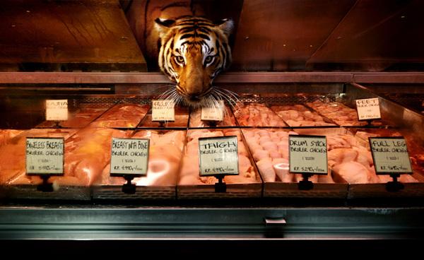 tigre en carniceria en supermercado