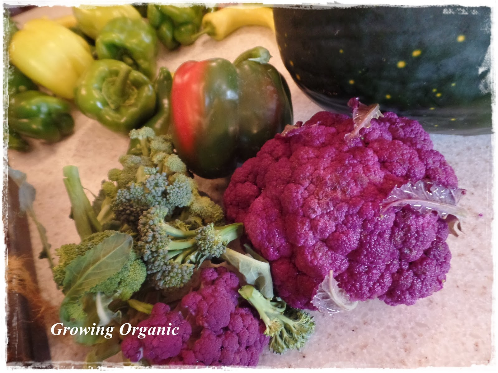 growing organic how to have continual harvests