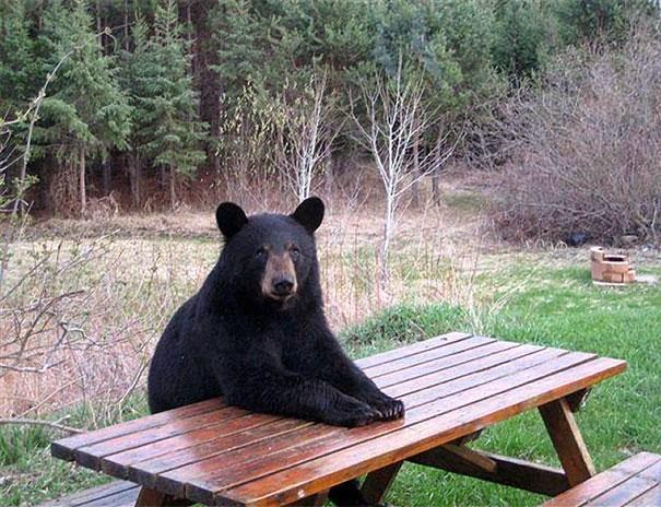 fotos de osos donde esta mi postre