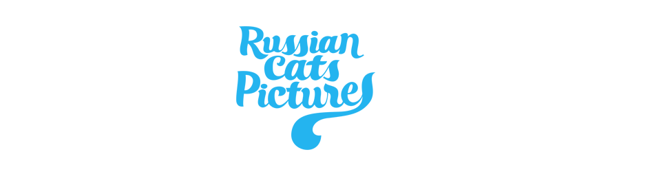 Russian Cats Pictures