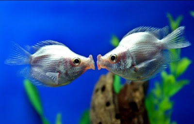 Beautiful fish pictures