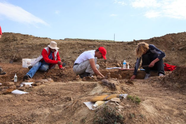 More dinosaur fossils found in NE Wyoming mass grave