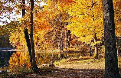 El bosque caducifolio