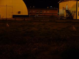 Зайцы на лужайке в полночь