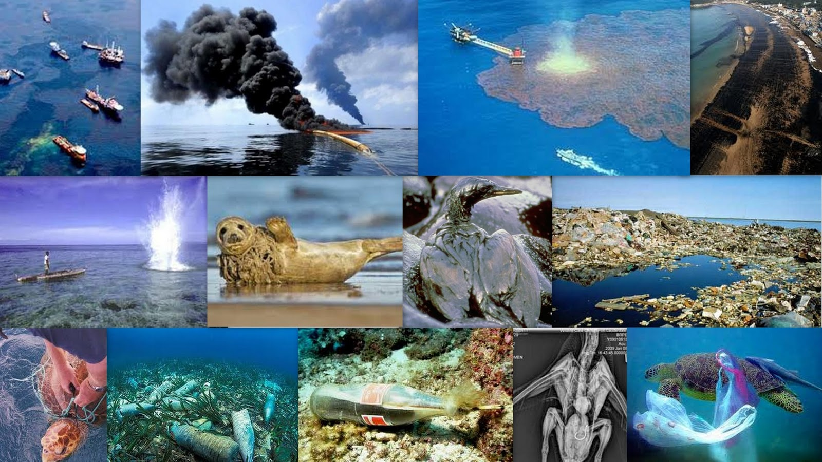 how humans impact marine ecosystems The exhaustive analysis of human impacts in all global marine ecosystems,  published thursday in current biology, categorized and mapped.